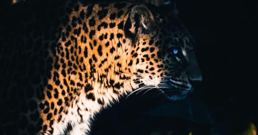Yggdrasil Partners ReelPlay, за да освободи Jaguar SuperWays от Bad Dingo